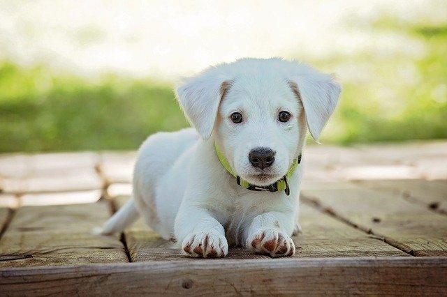 Voorkom het kauwen op een hondenluik
