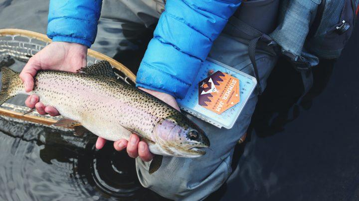 Wat heeft dating met vissen te maken?