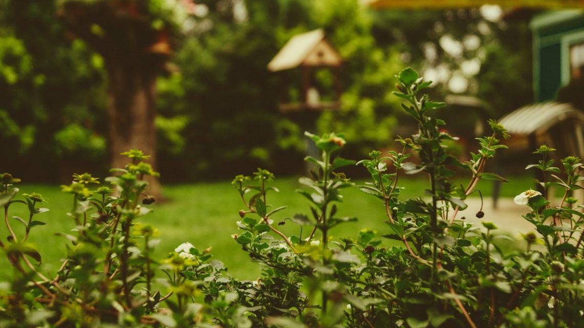 Hier moet je op letten bij de aanschaf van een tuinkast